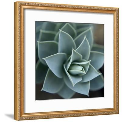 Star Plant 1-Karen Ussery-Framed Premium Photographic Print