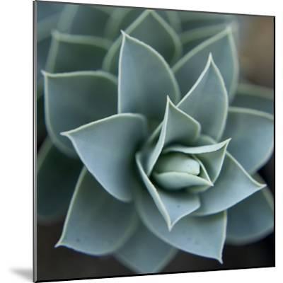 Star Plant 1-Karen Ussery-Mounted Premium Photographic Print