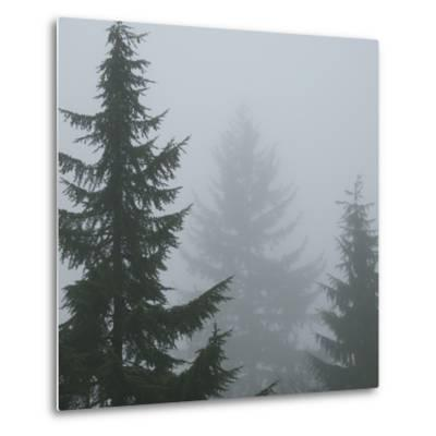 Foggy Morning 1-Karen Ussery-Metal Print