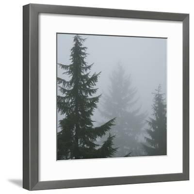 Foggy Morning 1-Karen Ussery-Framed Premium Photographic Print