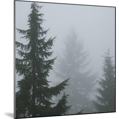 Foggy Morning 1-Karen Ussery-Mounted Premium Photographic Print
