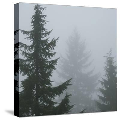 Foggy Morning 1-Karen Ussery-Stretched Canvas Print