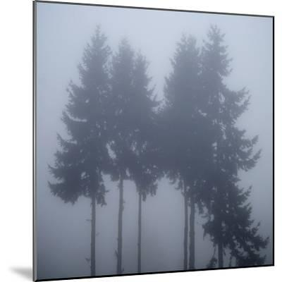 Foggy Morning 3-Karen Ussery-Mounted Premium Photographic Print