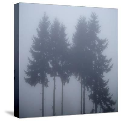 Foggy Morning 3-Karen Ussery-Stretched Canvas Print