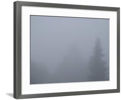 Foggy Morning 4-Karen Ussery-Framed Premium Photographic Print