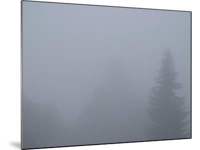Foggy Morning 4-Karen Ussery-Mounted Premium Photographic Print