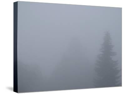 Foggy Morning 4-Karen Ussery-Stretched Canvas Print