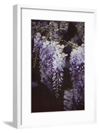 Wisteria Cascade I-Elizabeth Urquhart-Framed Art Print