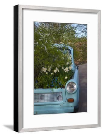 Potted Daffodils in Antique Turquoise Car-Anna Miller-Framed Photographic Print