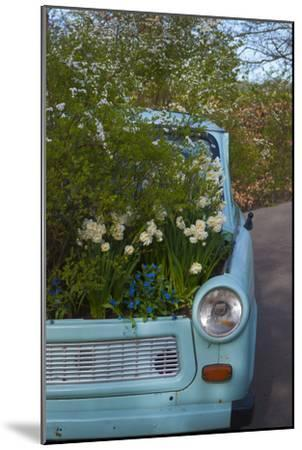 Potted Daffodils in Antique Turquoise Car-Anna Miller-Mounted Photographic Print