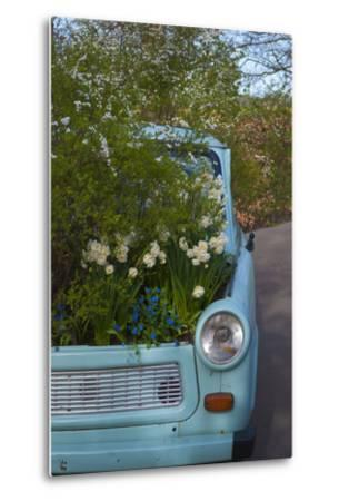 Potted Daffodils in Antique Turquoise Car-Anna Miller-Metal Print