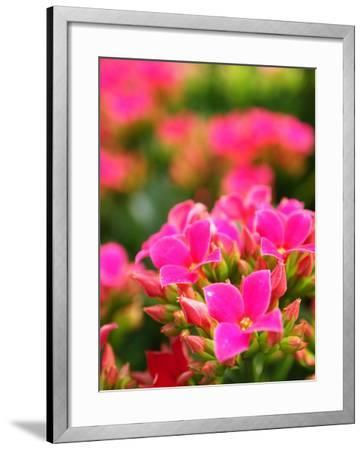 Pink Flowers-Anna Miller-Framed Photographic Print