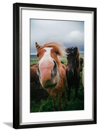 Iceland Horses and Clouds, Farm Scene, High Country Iceland-Vincent James-Framed Photographic Print