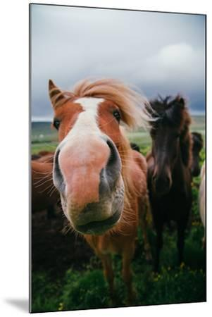 Iceland Horses and Clouds, Farm Scene, High Country Iceland-Vincent James-Mounted Photographic Print