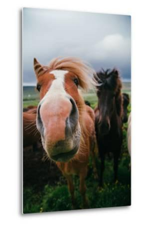 Iceland Horses and Clouds, Farm Scene, High Country Iceland-Vincent James-Metal Print