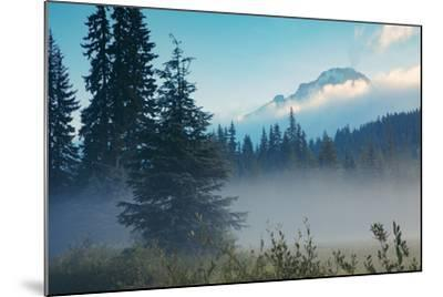Misty Mount Hood Meadow in Spring, Oregon Wilderness-Vincent James-Mounted Photographic Print