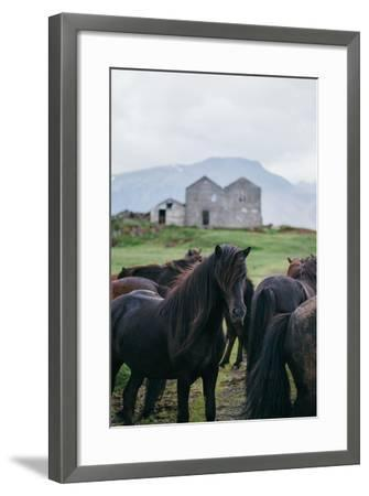 Beautiful Icelandic Horses, Southern Countryside Iceland-Vincent James-Framed Photographic Print
