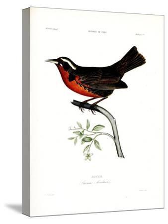 Loyca, Atlas de La Historia Física y Política de Chile, 1854-Claudio Gay-Stretched Canvas Print