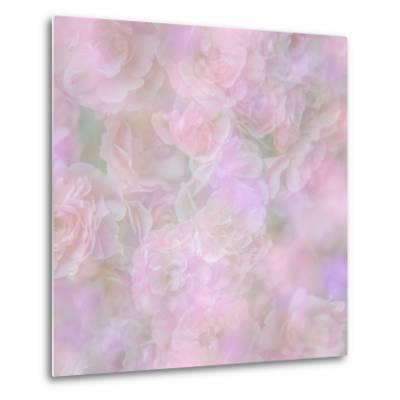 English Rose II-Doug Chinnery-Metal Print