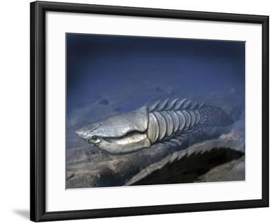 Anglaspis Is a Heterostracan from the Early Devonian of Norway-Stocktrek Images-Framed Art Print