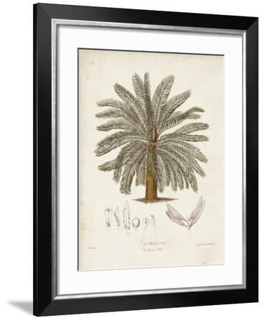 Antique Tropical Palm I-Elizabeth Twining-Framed Art Print