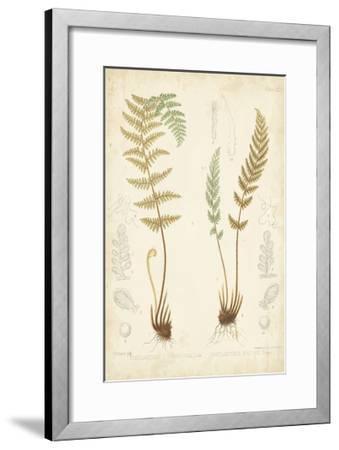Fern Study I-Vision Studio-Framed Art Print