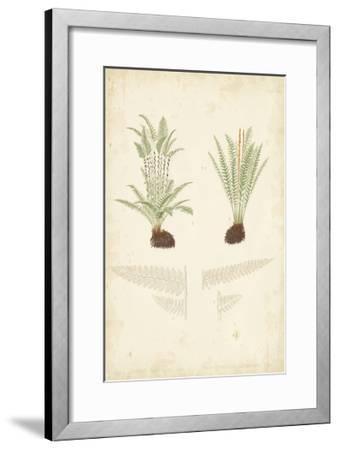 Fern Study III-Vision Studio-Framed Art Print