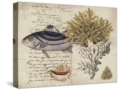 Sealife Journal III-Vision Studio-Stretched Canvas Print