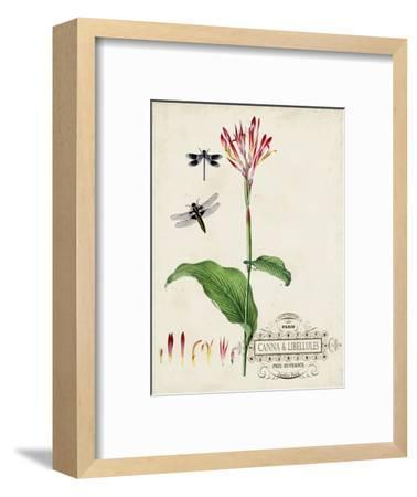 Canna and Dragonflies II-Vision Studio-Framed Art Print