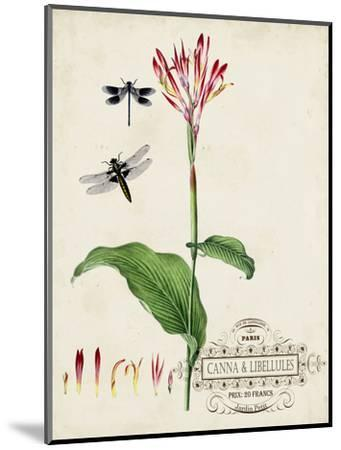 Canna and Dragonflies II-Vision Studio-Mounted Art Print