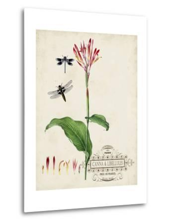Canna and Dragonflies II-Vision Studio-Metal Print