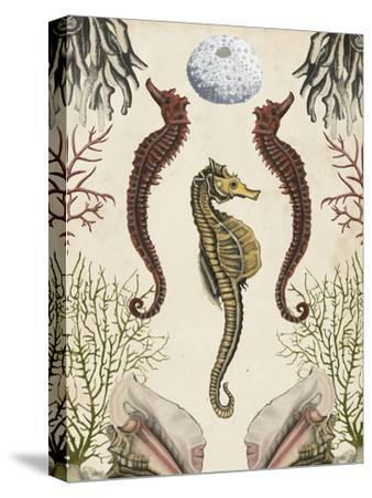 Antiquarian Menagerie - Seahorse-Naomi McCavitt-Stretched Canvas Print