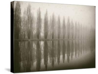 Trees in Fog V-Jody Stuart-Stretched Canvas Print