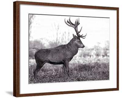 Monarch-Joe Reynolds-Framed Photographic Print