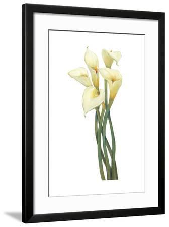 Callas on Silver I-Tim OToole-Framed Art Print