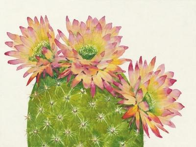 Desert Blossoms I-Tim OToole-Framed Art Print