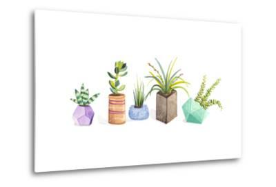 Succulent Display I-Rebekah Ewer-Metal Print