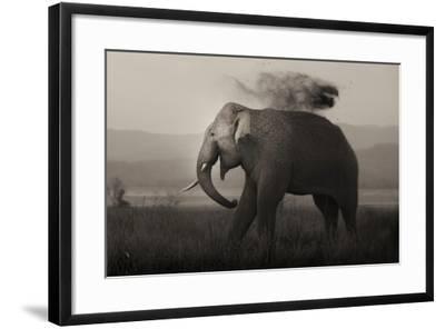 Tusker in Rain-Ganesh H Shankar-Framed Photographic Print