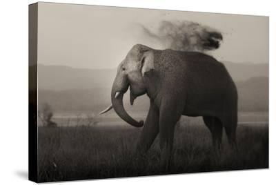 Tusker in Rain-Ganesh H Shankar-Stretched Canvas Print