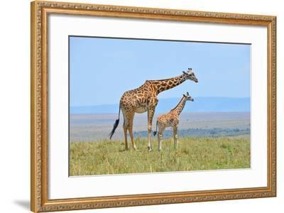 Masai Mara Giraffe-Jim Varley Photography-Framed Photographic Print