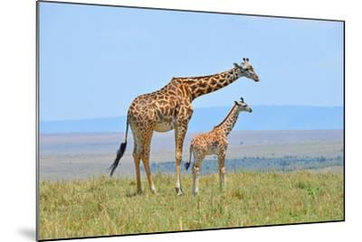 Masai Mara Giraffe-Jim Varley Photography-Mounted Photographic Print