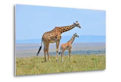 Masai Mara Giraffe-Jim Varley Photography-Metal Print