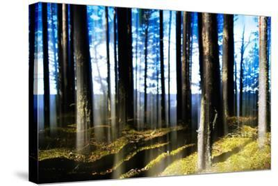 Forest Lake Horizon Light Vertical Abstraction-Nickolay Loginov-Stretched Canvas Print