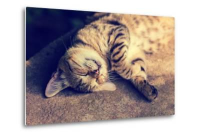 Portrait of a Happy Cat Sleeping on the Back-vvvita-Metal Print