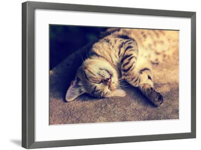 Portrait of a Happy Cat Sleeping on the Back-vvvita-Framed Photographic Print