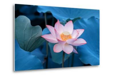 Lotus Flower-Wu Kailiang-Metal Print