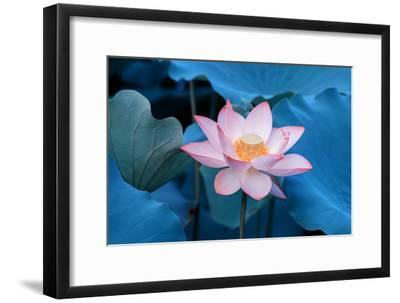 Lotus Flower-Wu Kailiang-Framed Photographic Print