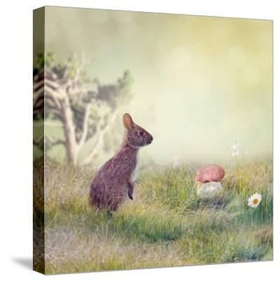 Wild Rabbit Standing Up in the Grass-Svetlana Foote-Stretched Canvas Print