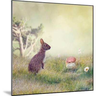 Wild Rabbit Standing Up in the Grass-Svetlana Foote-Mounted Photographic Print