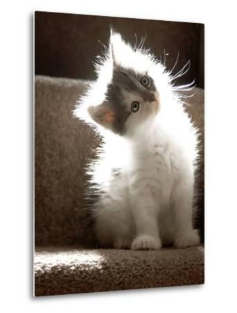 Close Up of Small Kitten Sitting at Bottom of Stairs, Glowing under Sunlight-Trigger Image-Metal Print